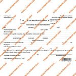 Pátria Nyomtatvány Alkalmassági vélemény a gépjárművezetői alkalmasságról 2 lapos garnitúra A/5 fekvő
